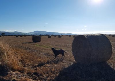 dog_field-1024x576